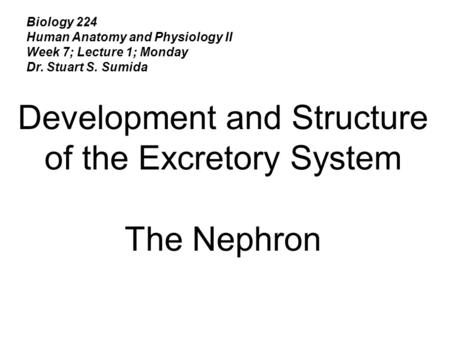 Biology 224 Human Anatomy and Physiology II Week 7; Lecture 1; Monday Dr. Stuart S. Sumida Development and Structure of the Excretory System The Nephron.