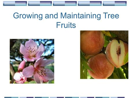 Growing and Maintaining Tree Fruits