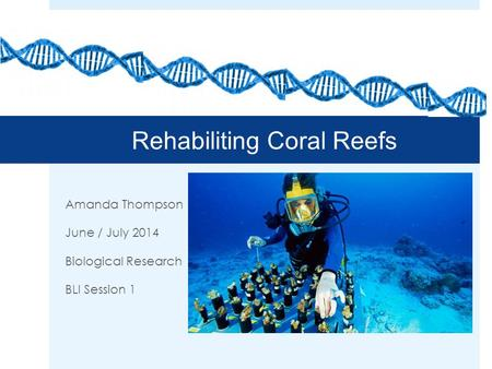 Rehabiliting Coral Reefs Amanda Thompson June / July 2014 Biological Research BLI Session 1.