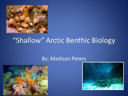 """Shallow"" Arctic Benthic Biology By: Madison Peters."