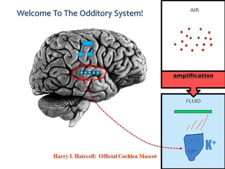 Welcome To The Odditory System! Harry I. Haircell: Official Cochlea Mascot K+K+ AIR FLUID amplification.