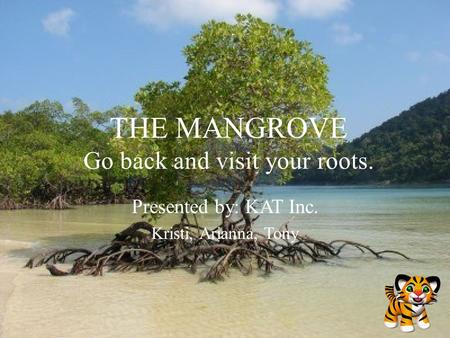 THE MANGROVE Go back and visit your roots. Presented by: KAT Inc. Kristi, Arianna, Tony.