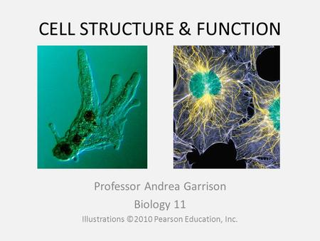 CELL STRUCTURE & FUNCTION Professor Andrea Garrison Biology 11 Illustrations ©2010 Pearson Education, Inc.