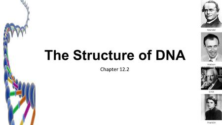 The Structure of DNA Mendel Watson Chapter 12.2 Crick Franklin.