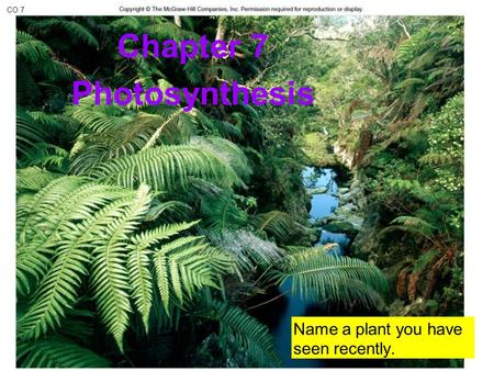 CO 7 Chapter 7 Photosynthesis Name a plant you have seen recently.