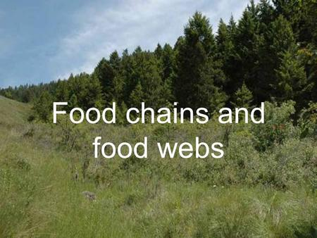Food chains and food webs We Are Learning To… …use words correctly to describe feeding relationships between animals and plants. …show how energy flows.
