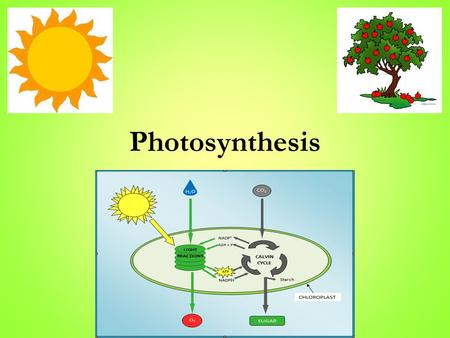 Photosynthesis. Trapping the Sun's Energy ● Photosynthesis the process by which plants capture energy from the sun to build carbohydrates(sugars) through.