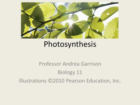 Photosynthesis Professor Andrea Garrison Biology 11 Illustrations ©2010 Pearson Education, Inc.