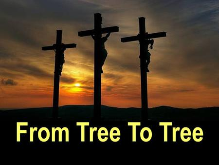 From Tree To Tree. From the TREE of Life (Garden of Eden) to the TREE of Life (Cross of Christ)