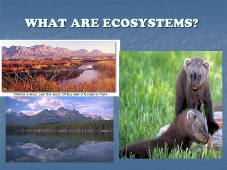 WHAT ARE ECOSYSTEMS?. Where Things Live Living things need a place to live and grow. Living things need a place to live and grow.