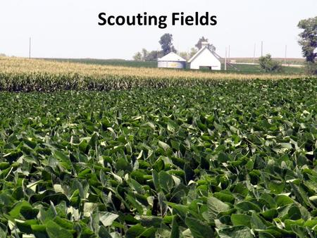 Scouting Fields. Overview 1.Do your homework 2.Basics of scouting 3.Help! I still don't know.