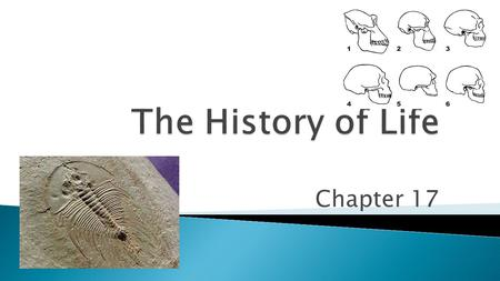 Chapter 17.  What is the name for a scientist who studies fossils?  Fossil Record provides evidence of the history life on Earth. ◦ Infer structure.