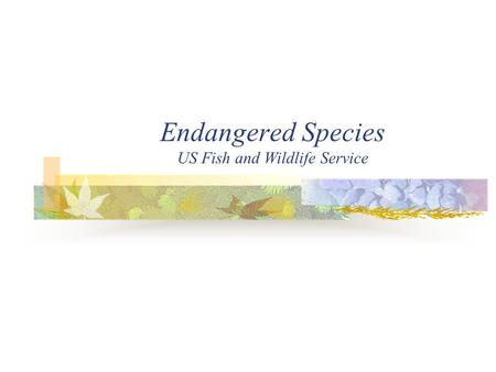 Endangered Species US Fish and Wildlife Service. Endangered Species Endangered Species Act Passed in 1983 Purpose Conserve Endangered and Threatened Species.