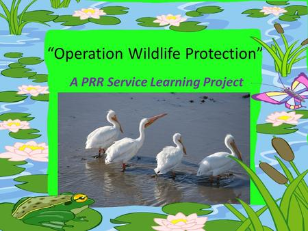 """Operation Wildlife Protection"" A PRR Service Learning Project."