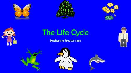 The Life Cycle Katharine Steuterman.