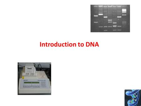 Introduction to DNA. The Central Dogma of Biology.