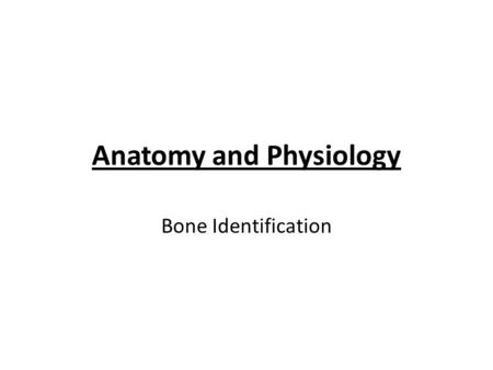 Anatomy and Physiology Bone Identification. Hyoid bone.