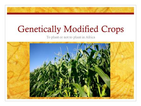 Genetically Modified Crops To plant or not to plant in Africa.