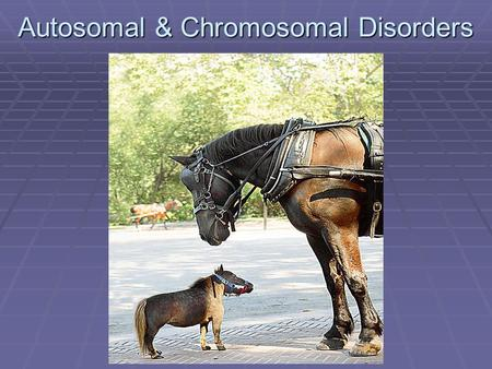 Autosomal & Chromosomal Disorders. Human Genetic Disorders  There are many genetic disorders that plague humans.  Some disorders are caused by a change.