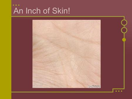 An Inch of Skin!. What do you think you'd find in one square inch of human skin? Write down a list of all the things that you think you might find. Think.