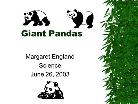 Giant Pandas Margaret England Science June 26, 2003.