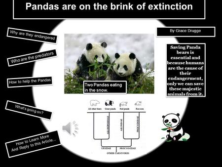 Pandas are on the brink of extinction
