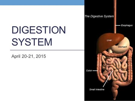 DIGESTION SYSTEM April 20-21, 2015. Functions 1. Ingestion (intake of food) 2. Digestion (physical and chemical break down of food) 3. Absorption (passage.