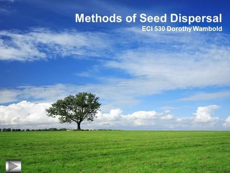 Methods of Seed Dispersal