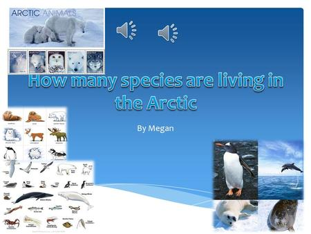 By Megan  This is my Introduction to my paragraph.  I know about animals living in the arctic and how many there are. I think that there are many animals.