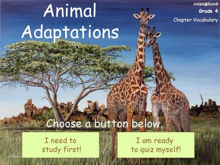 Animal Adaptations I need to study first! I am ready to quiz myself! Choose a button below. Grade 4 Chapter Vocabulary I need to study first! I am ready.