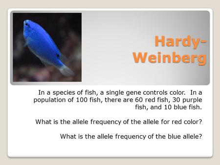 Hardy- Weinberg In a species of fish, a single gene controls color. In a population of 100 fish, there are 60 red fish, 30 purple fish, and 10 blue fish.