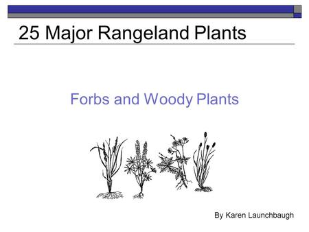 Forbs and Woody Plants 25 Major Rangeland Plants By Karen Launchbaugh.
