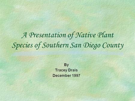 A Presentation of Native Plant Species of Southern San Diego County By Tracey Drais December 1997.