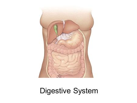 Digestive System. Development of the Digestive System What are the chief derivatives of the primitive gut? Name the embryonic germ layer that lines these.