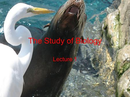 The Study of Biology Lecture 1.