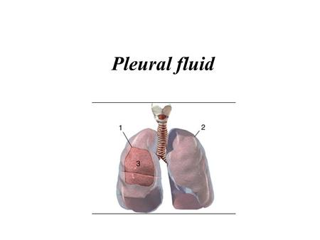 Pleural fluid.