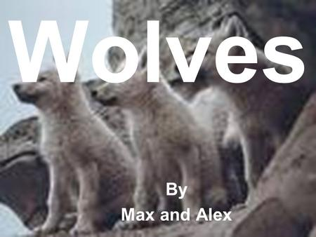Wolves By Max and Alex.