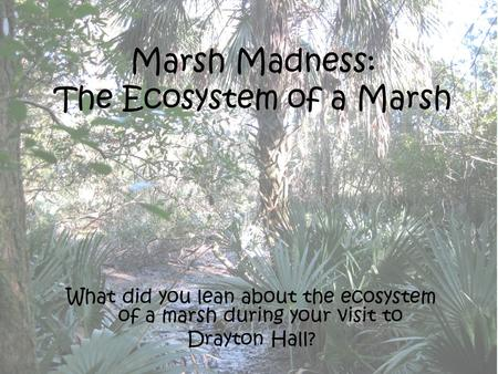 Marsh Madness: The Ecosystem of a Marsh What did you lean about the ecosystem of a marsh during your visit to Drayton Hall?