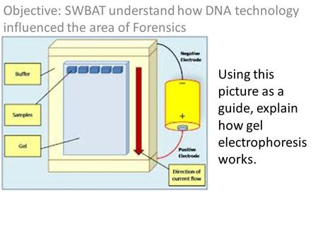Objective: SWBAT understand how DNA technology influenced the area of Forensics Using this picture as a guide, explain how gel electrophoresis works.