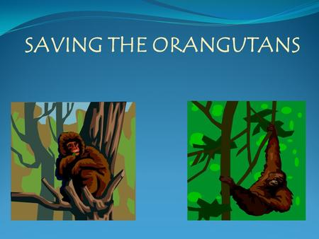 SAVING THE ORANGUTANS. Know Orangutans are dying due to deforestation, diseases, and forest fires caused by palm tree plantation owners. Food Chain Orangutans.