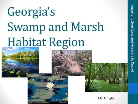 Georgia's Swamp and Marsh Habitat Region