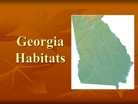 Georgia Habitats. Georgia Piedmont Habitat The Georgia Piedmont is between the mountains and the plains. The Georgia Piedmont is between the mountains.