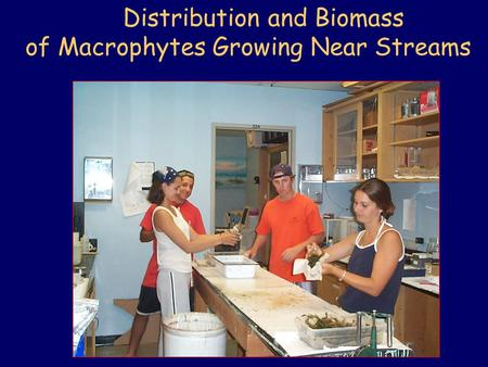 Distribution and Biomass of Macrophytes Growing Near Streams.