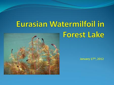 January 17 th, 2012. Eurasian Watermilfoil (EWM) Exotic milfoil Can grow nearly 10 feet in length Can forms dense mats at the waters surface Grows in.