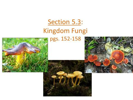 Section 5.3: Kingdom Fungi pgs