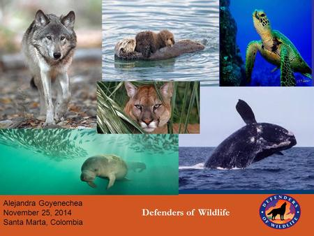Alejandra Goyenechea November 25, 2014 Santa Marta, Colombia Defenders of Wildlife ©Corel Corporation.