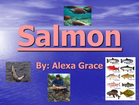 Salmon By: Alexa Grace. Endangered Salmon Facts Logging over the past century has had a devastating impact on the habitat of endangered salmon and steelhead.