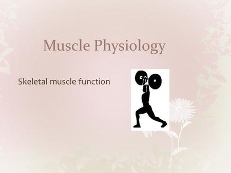 Muscle Physiology Skeletal muscle function. Muscle Strength A motor unit is one motor neuron and all of the muscle fibers it controls The force with which.