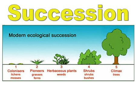 Primary Succession Defined: Establishment and development of an ecosystem in an uninhabited environment Starts with bare rock.