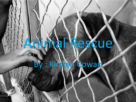 Animal Rescue By : Kirsten Cowan. Thesis Statement: Animal rescue is very important to the lives of several animals and to any community out there because.